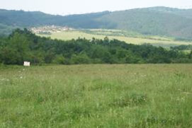 Grasslands represent around half of the land in the water protection zone of Yovkovtsi dam; Y.Kazakova