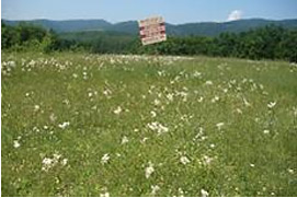 HNV grasslands are often sold for development in more touristic areas; Y.Kazakova