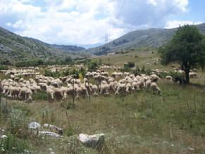 High Nature Value Farming in Macedonia